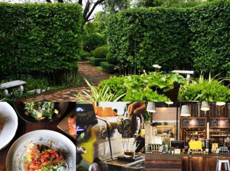 Café ในสวน